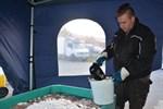Rasmus Sigg står i Kaskö företagarförenings tält och fyller ämbar med färsk strömming. I fjol sålde man 3.000 kilo på två dagar, i år har man laddat upp med 4.000 kilo.
