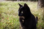 Katten Fredrik