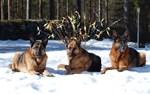 Glada påskhundar i Terjärv.